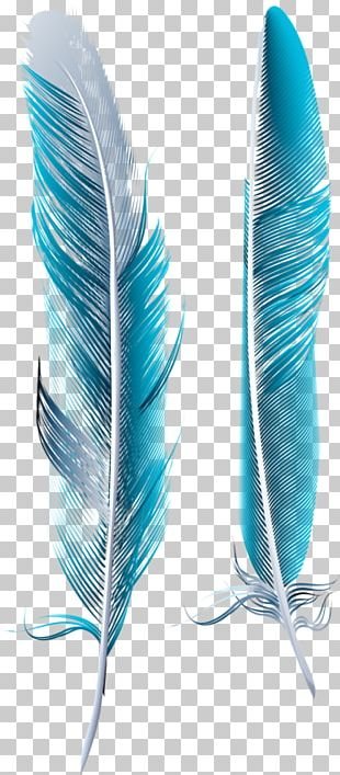 Bird Feather Blue Asiatic Peafowl PNG