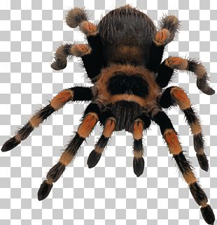 Spider Web PNG
