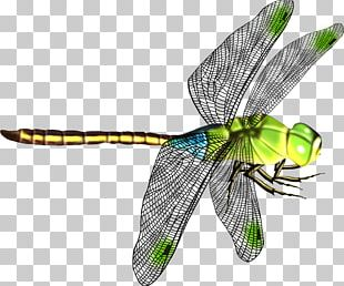 Dragonfly Icon PNG