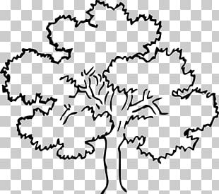 Tree Oak Outline PNG