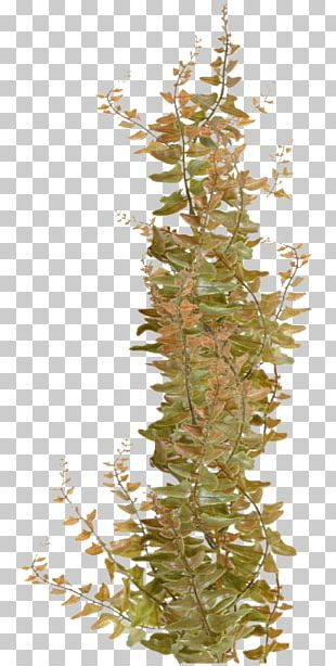 Algae Seaweed Coral PNG
