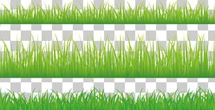 Stock Photography Green Illustration PNG