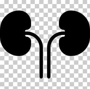 Kidney Human Body PNG