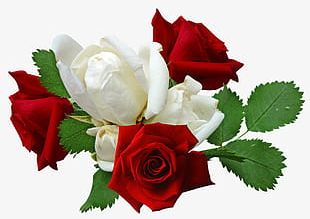 Red Roses And White Roses PNG