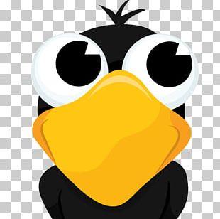 Crow Bird Cartoon Drawing PNG