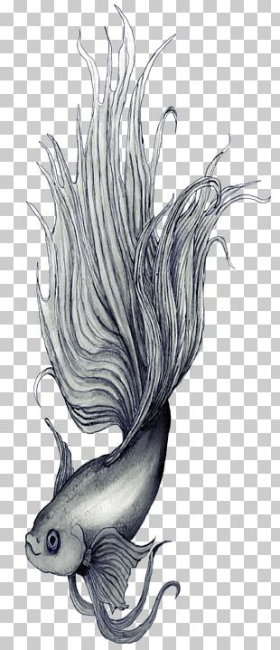 Siamese Fighting Fish Drawing Sketch PNG