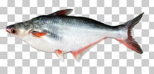 Iridescent Shark Basa Fish Fillet Food PNG