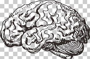 Human Brain Information PNG