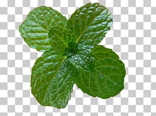 Mint Julep Mojito Peppermint Food Recipe PNG