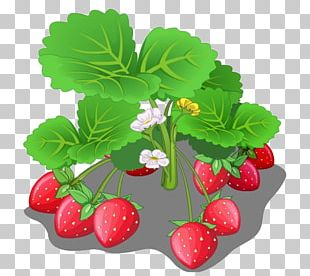 Strawberry Fruit Cartoon PNG