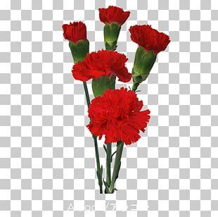Carnation Cut Flowers Floristry Floral Design PNG