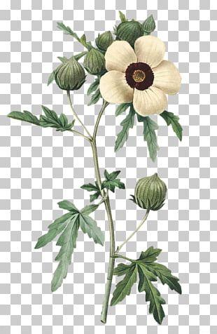 Choix Des Plus Belles Fleurs Pierre-Joseph Redouté (1759-1840) Botanical Illustration Art PNG