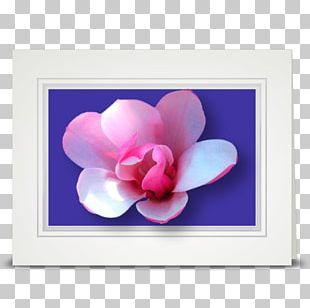 Flower Tulip Petal Violet Pink PNG