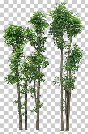 Tree OpenOffice Draw PNG