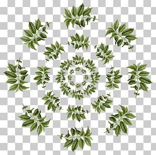 Arabica Coffee Leaf Coffee Tea Leaves Pattern PNG
