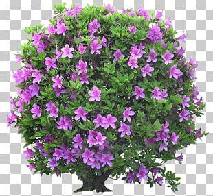 Flower Garden Shrub Ornamental Plant Tree PNG