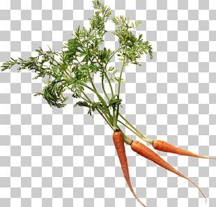 More Super Juice: Juicing For Health And Healing Branch Plant Stem Leaf Vegetable Flower PNG