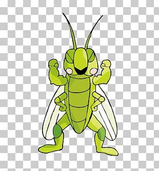 Cartoon Locust Illustration PNG