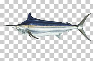 International Game Fish Association Black Marlin Atlantic Blue Marlin Marlin Fishing PNG