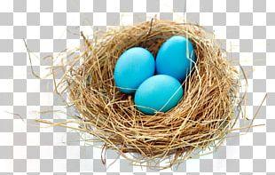 Nest Bird PNG
