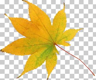 Leaf Abscission Raster Graphics Autumn PNG