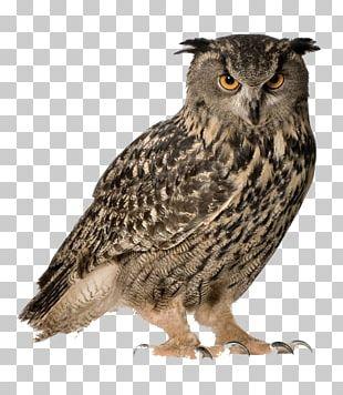 Eurasian Eagle-owl Snowy Owl Great Horned Owl Bird PNG