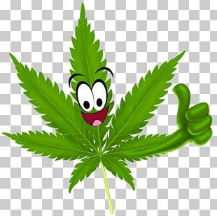 Medical Cannabis Legality Of Cannabis Drug Medical Marijuana Card PNG