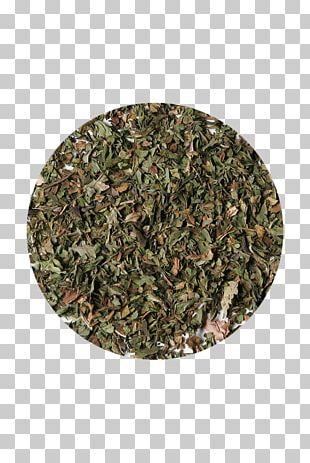 Sencha Green Tea Coffee Camellia Sinensis PNG