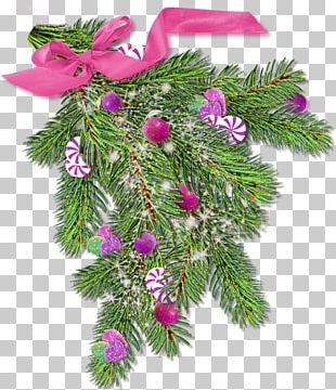 Spruce Christmas Ornament Fir Pine PNG