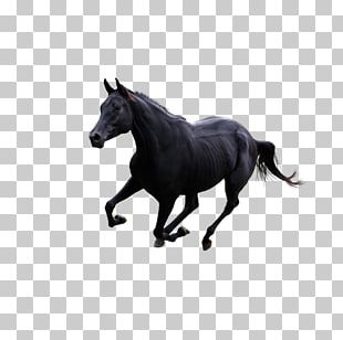Horse Gallop Pony PNG
