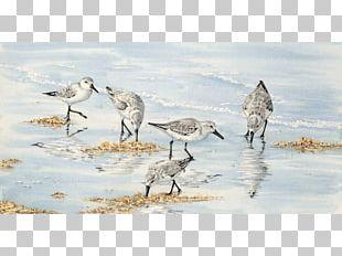 Bird Watercolor Painting Pelican Crane PNG