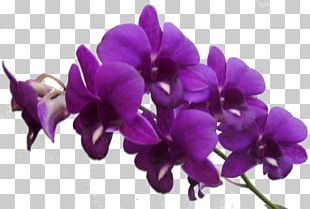 Flower Purple Violet PNG