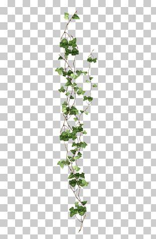 Vine Ivy Plant PNG