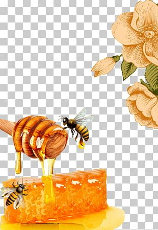 Honey Bee Honeycomb Beeswax PNG