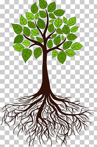 Tree Root Branch PNG