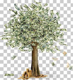 Moneytree PNG