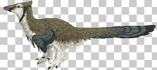 Galliformes Beak Feather Wildlife Tail PNG