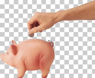 Coin Pig PNG