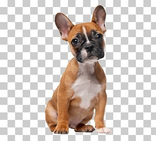 French Bulldog Puppy Puggle Dog Grooming PNG