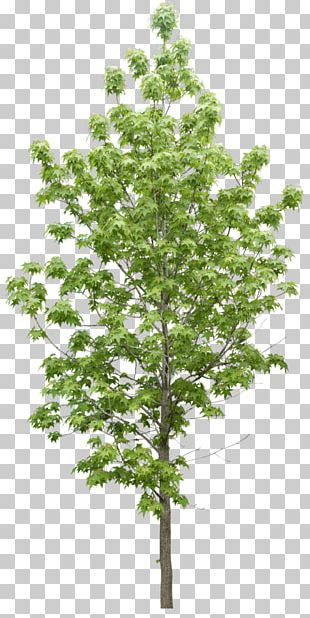 Tree Plant Data Icon PNG