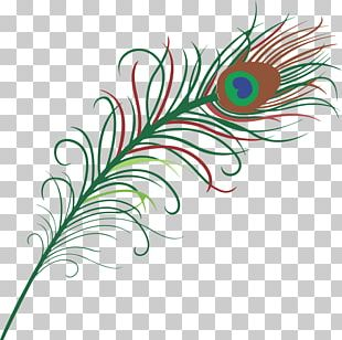 Bird Feather Peafowl PNG