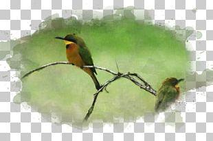 Bird Watercolor Painting Art Museum PNG