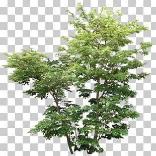 Tree Shrub Rendering Plant Branch PNG
