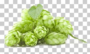 Beer Brewing Grains & Malts India Pale Ale Hops Brewery PNG