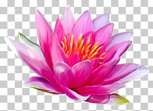 Lotus Flower Png Images Lotus Flower Clipart Free Download