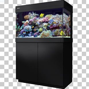 Red Sea Reef Aquarium Aquariums Coral Reef PNG