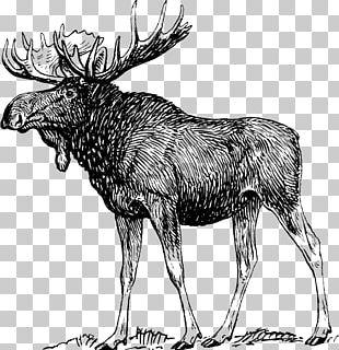 Moose Elk Reindeer PNG