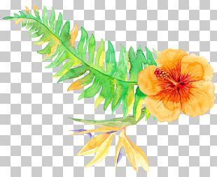 Tropics Tropical Vegetation PNG