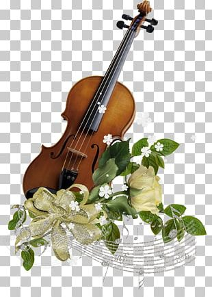 Violin Family Musical Instrument String Cello PNG