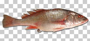 Northern Red Snapper Tilapia Barramundi Fish Products Red Seabream PNG
